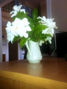 Gardenias in porcelain vase